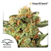 Orange Hill Special (Dutch Passion) femminizzata