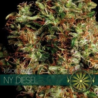 NY Diesel (Vision Seeds) feminisiert