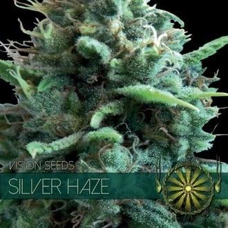 Silver Haze (Vision Seeds) feminisiert