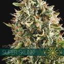 Super Skunk (Vision Seeds) feminisiert