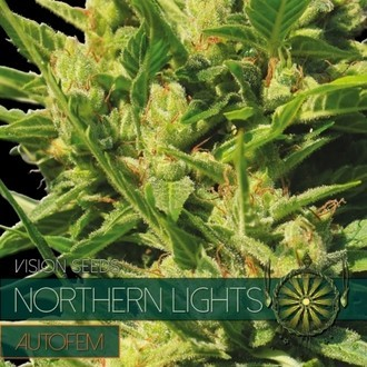Northern Lights Autoflowering (Vision Seeds) feminisiert