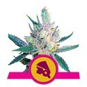 Royal Cheese - Fast Flowering (Royal Queen Seeds) feminisiert