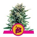 Blue Cheese (Royal Queen Seeds) feminized