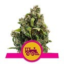 Candy Kush Express - Fast Flowering (Royal Queen Seeds) feminisiert