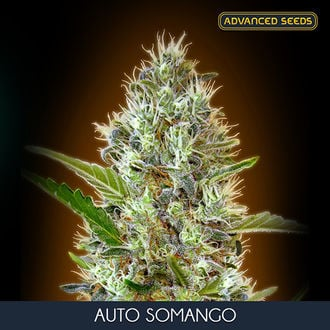 Auto Somango (Advanced Seeds) feminized