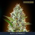 Auto Somango (Advanced Seeds) feminisiert