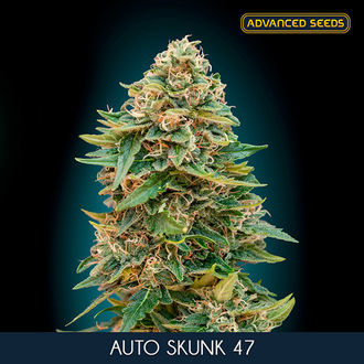 Auto Skunk 47 (Advanced Seeds) feminized