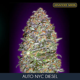 Auto NYC Diesel (Advanced Seeds) feminisiert