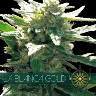 La Blanca Gold (Vision Seeds) feminisiert