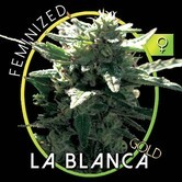 La Blanca Gold (Vision Seeds) feminized