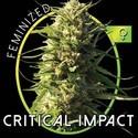 Critical Impact (Vision Seeds) femminizzata