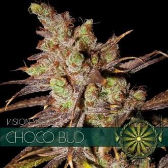 Choco Bud (Vision Seeds) feminisiert