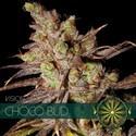 Choco Bud (Vision Seeds) femminizzata