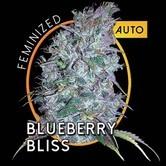 Blueberry Bliss Autofiorente (Vision Seeds) femminizzata