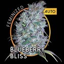 Blueberry Bliss Autoflowering (Vision Seeds) feminisiert
