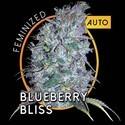 Blueberry Bliss Autoflowering (Vision Seeds) feminized