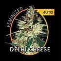 Delhi Cheese Autofiorente (Vision Seeds) femminizzata