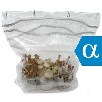 Zamnesia Zuchtset Sortenpackung ALPHA