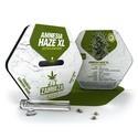 Amnesia Haze XL Autoflowering (Zambeza) feminisiert