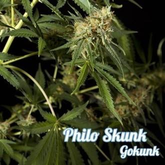 Philo Skunk (Philosopher Seeds) feminisiert