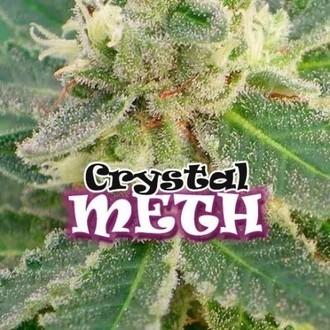 Crystal M.E.T.H. (Dr. Underground) feminisiert