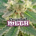 Crystal M.E.T.H. (Dr. Underground) femminizzata