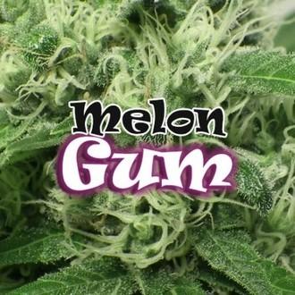 Melon Gum (Dr. Underground) Femminizzata