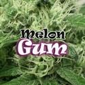 Melon Gum (Dr. Underground) feminisiert