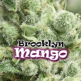 Brooklyn Mango (Dr. Underground) feminized
