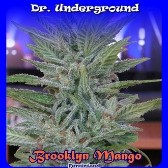 Brooklyn Mango (Dr. Underground) femminizzata
