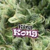 King Kong (Dr. Underground) feminisiert