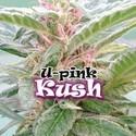 U-Pink Kush (Dr. Underground) feminized
