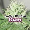 Auto Melon Gum (Dr. Underground) femminizzata