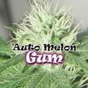 Auto Melon Gum (Dr. Underground) feminisiert