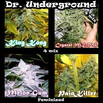 Surprise Killer Mix (Dr. Underground) feminized