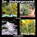 Surprise Killer Mix (Dr. Underground) feminized