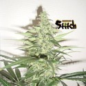 Diesel Haze Auto (Flash Auto Seeds) feminized