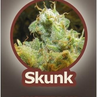 Skunk (John Sinclair Seeds) femminizzata