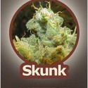 Skunk (John Sinclair Seeds) feminized