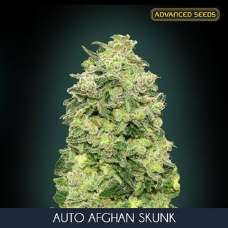 Auto Afghan Skunk (Advanced Seeds) feminisiert