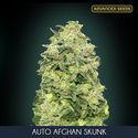 Auto Afghan Skunk (Advanced Seeds) feminisiert
