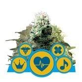 CBD Mix (Royal Queen Seeds) feminized