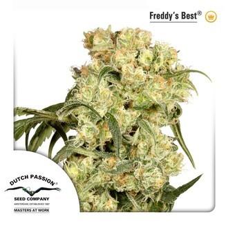 Freddy's Best (Dutch Passion) femminizzata