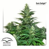 Dark Delight (Dutch Passion) feminized