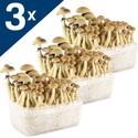 3 Supa Gro Kits