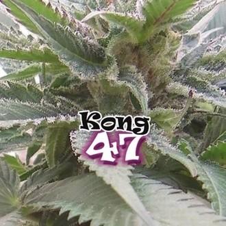 Kong 47 (Dr. Underground) feminisiert