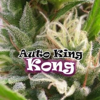Auto King Kong (Dr. Underground) feminisiert