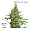 White Widow (Dutch Passion) feminized