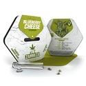Blueberry Cheese (Zambeza) feminisiert