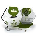 NYC Diesel Autoflowering (Zambeza) feminized